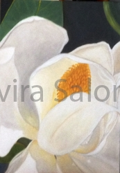 Magnolia bianca